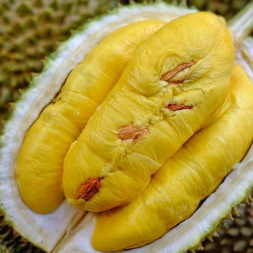 Bibit Durian Musangking Super Unggul Cepat Berbuah Sulawesi Utara