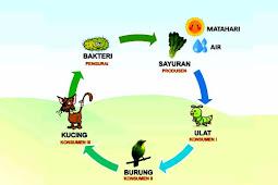 Jawaban ! Pengaruh Rantai Makanan Terhadap Ekosistem