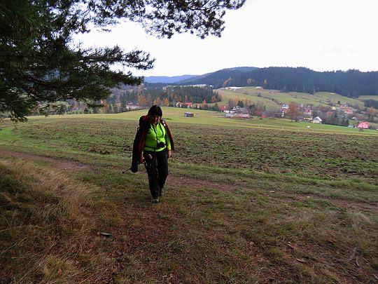 Przed wejściem do lasu nad wsią Łętowe.