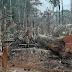 Quarteto é preso por desmatamento no Amazonas