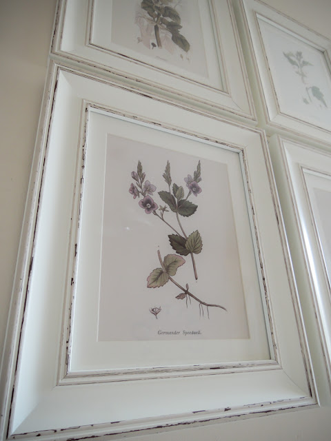 Botanical Wildflower Prints