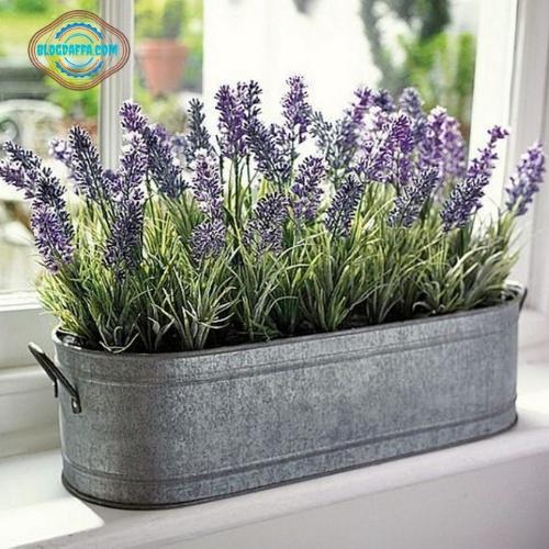 Tanaman hias murah bunga lavender