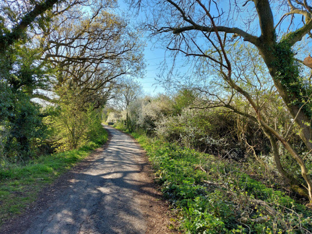 A paved path through a wood