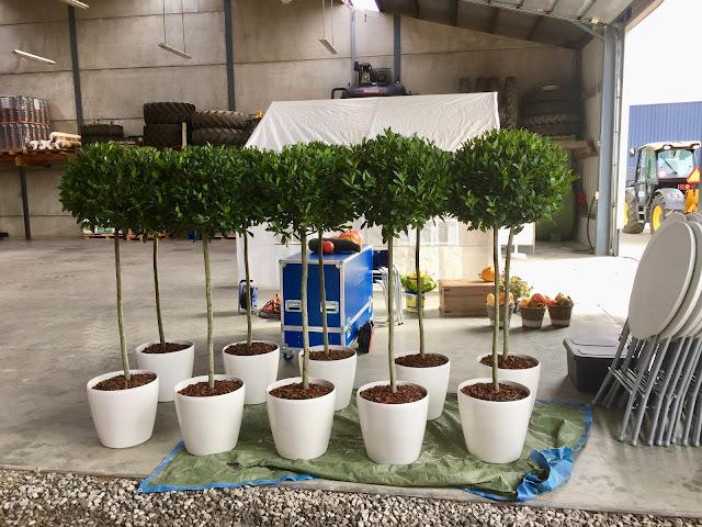 Planten om te huren voor beurs event feest bedrijf in Brussel Antwerpen Leuven Gent Hasselt