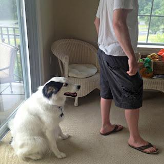 Su perro parece que esta siempre en la pared últimamente, exhibiendo problemas serios de comportamiento  y ninguna  corrección verbal parece funcionar
