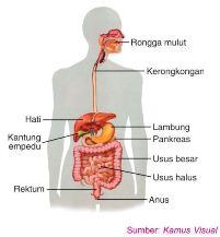 Soal yang berkaitan dengan Organ dan Gangguannya Fungsi Organ Manusia dan Jenis Gangguannya