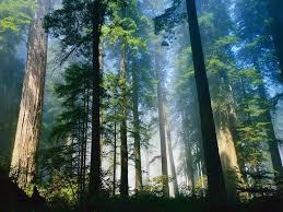Hutan (Pengertian, Jenis / Macam, Fungsi, Manfaat)