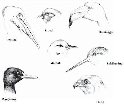 Perbedaan Bentuk Paruh pada Kelompok burung