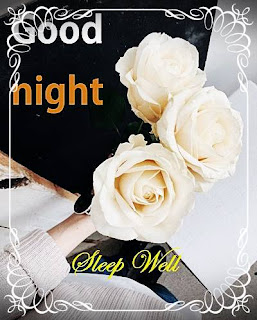 good night white colour rose with sleep well quotes