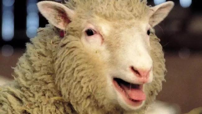 Η «συγκλονιστική» είδηση της ημέρας:Το αγαπημένο παραμύθι της πρώην βουλευτή,  και τα πρόβατα !!