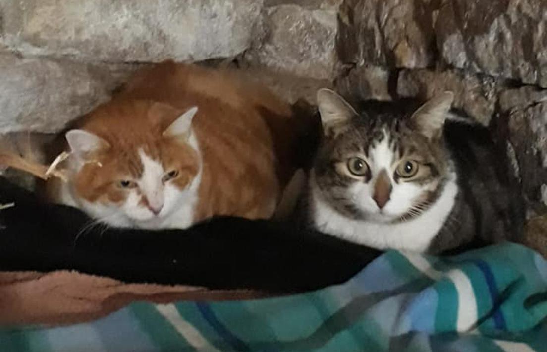 FOTOS: Un gato francés dice adiós a más de un kilo de rastas y empieza una nueva vida
