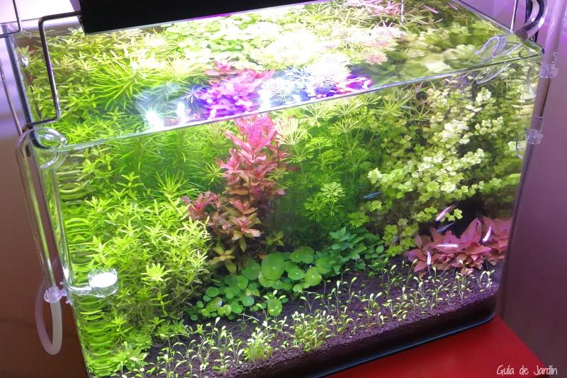 Agua de acuario para regar las plantas guia de jardin for Peceras de jardin