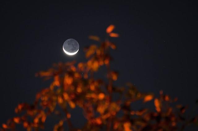 Night; autumn leaves; crescent moon