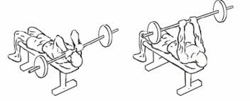 Triceps skull crusher, triceps, tricep exercise, compound exercise for triceps