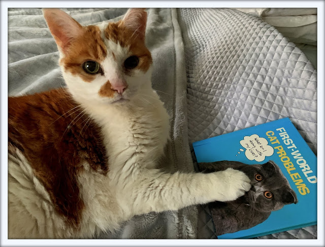 Feline Fiction on Fridays #105 at Amber's Library  @BionicBasil® Amber's purrsonal copy of First-World Cat Problems