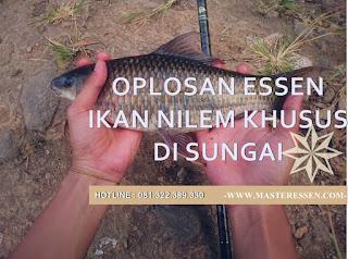 Essen Ikan Nilem Khusus Di Sungai