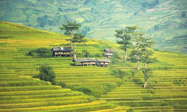 agribisnis pertanian
