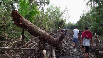 Pembukaan Jalan Yang Merusak Hutan Mangrove Dipastikan Tanpa Izin