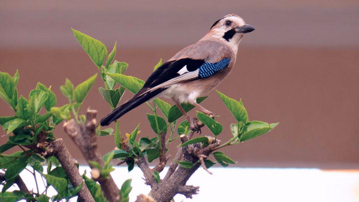 best camera for bird watching