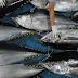 Daerah Penghasil Ikan Tuna di Idonesia