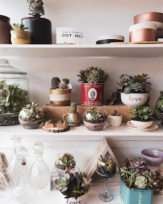 Assorted potted plants on white shelves. Pick a plant and pot me-by Amy Chen on Unsplash