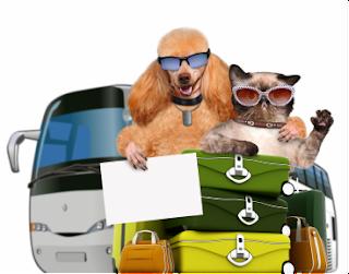 Consejos para viajar con mascota