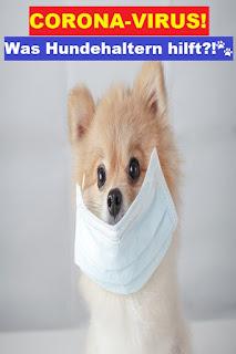 Coronavirus bei Hunden?