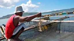 Dipertanyakan, Keputusan KKP Soal Izin Budidaya Lobster di Luar Wilayah Sumber Benih