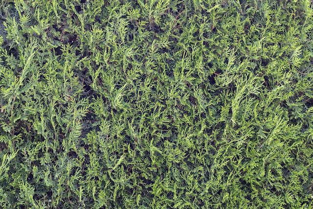 Natural Green Wall Free Image
