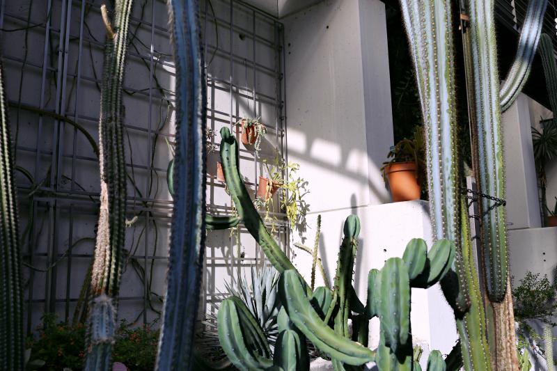 Invernaderos del real jard n bot nico de madrid hampton sc for Jardin cactus madrid