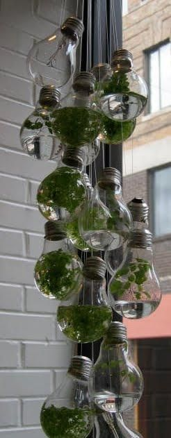 Vài tưởng giúp bạn tận dụng những bóng đèn tròn đã cháy.