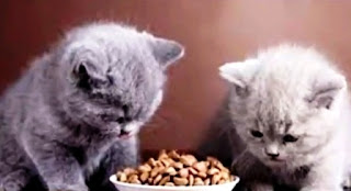 Recipes and How to Make a Simple Home Cat Food