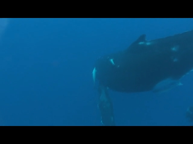 Swimming with Whales (Wide Screen)