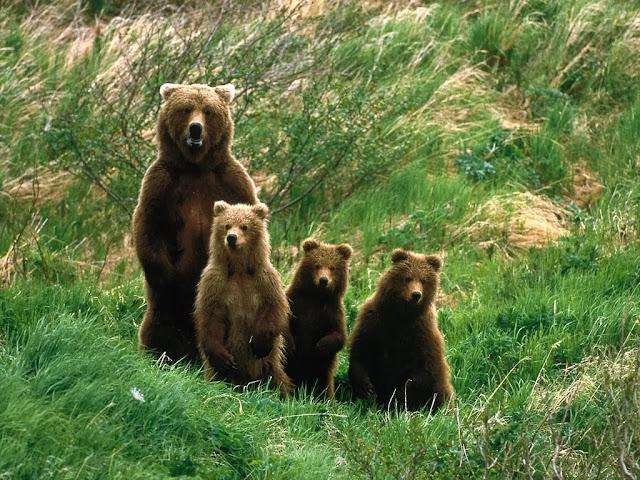 Pack Creek Bear Preserve in Juneau, Alaska