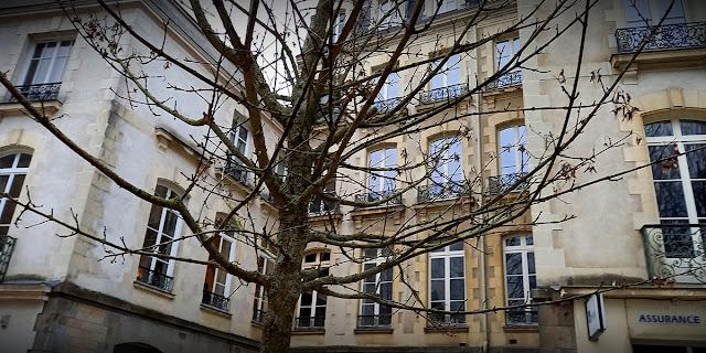 Rue des Francs Bourgeois, les premiers bourgeons des érables apparaissent... (21 Février 2021)