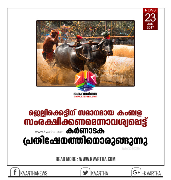 After Jallikattu, 50K Tuluvas gear up to protest for Kambala in Mangaluru . Taking a cue from historic Jallikattu protest put up by people of Tamil Nadu, even people of Coastal Karnataka are gearing up to stage a a protest on similar lines to save Kambala, a traditional sport of coastal belt.