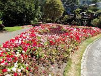 Geranium border - Wellington Botanic Garden, New Zealand
