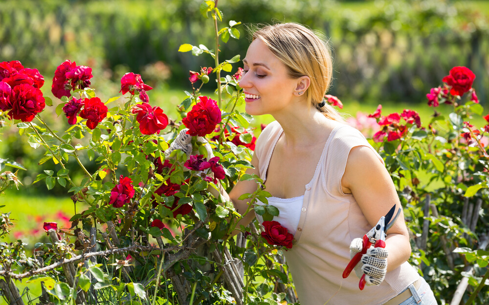 Top 6 Tips for Rose Gardening and How to Deal with Rose Diseases?