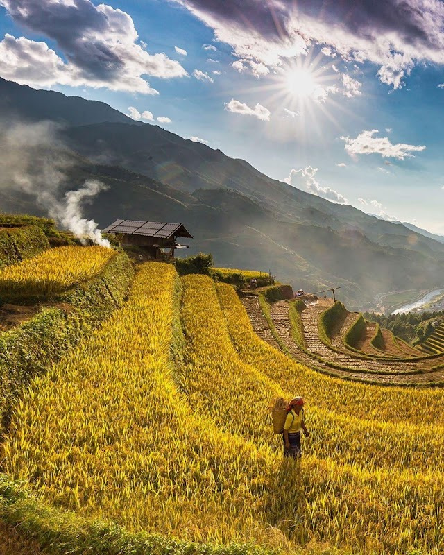 The Vietnamese young take advantage to take check-in photos in Mu Cang Chai yellow ripe rice season