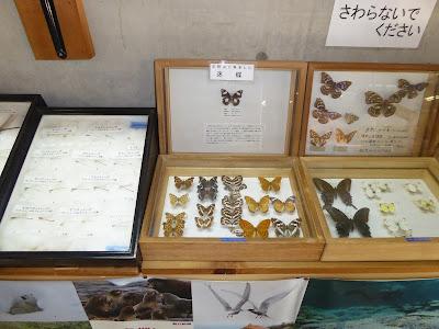 交野いきものふれあいの里・ふれあいセンター  蝶々