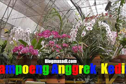 Review Kampung Anggrek Kediri, Surga Bagi Pecinta Anggrek