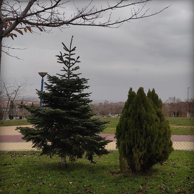 Foto árboles Madirex