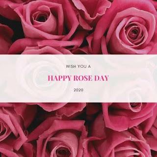 Rose Day Hd Pics