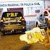 PRF e Canil da Guarda Municipal de Irati apreendem 67 kg de maconha