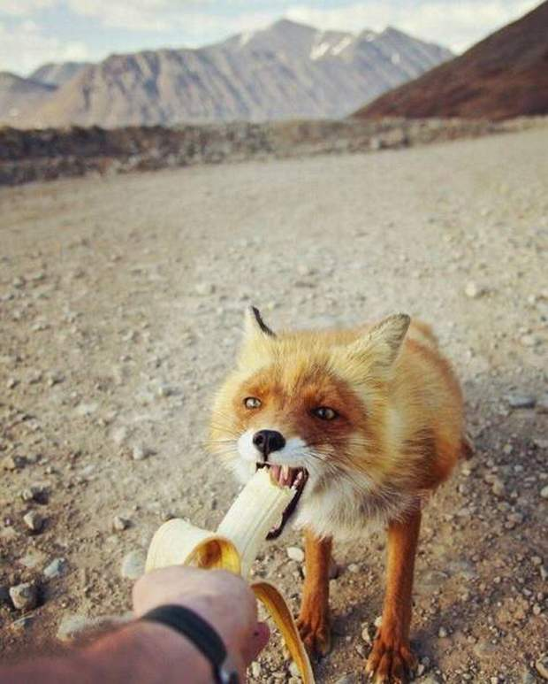 Funny animals of the week - 26 August 2016, funny animal photo, best cute animals, adorable animal picture