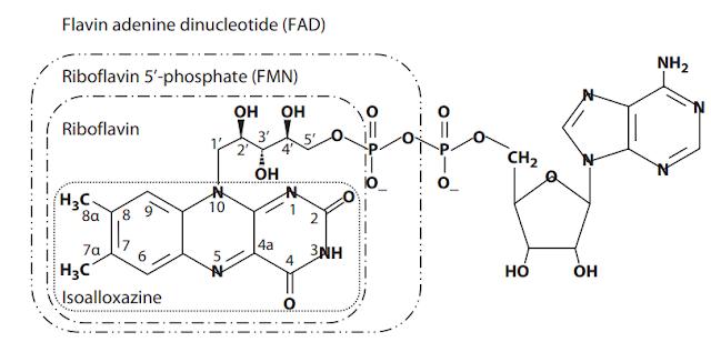 Struktur kimia riboflavin