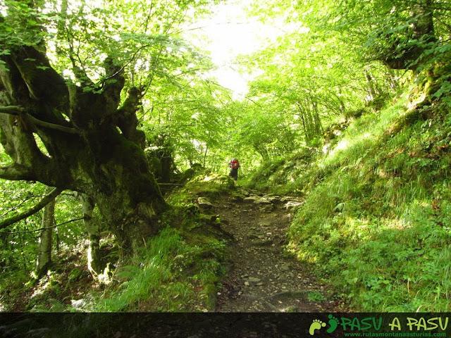 Sendero en el bosque de Quirós