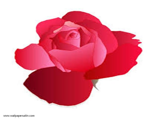 Rose Wallpaper - 2