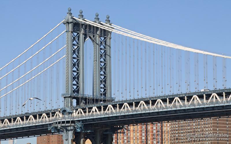 Γλάρος στη Γέφυρα Manhattan
