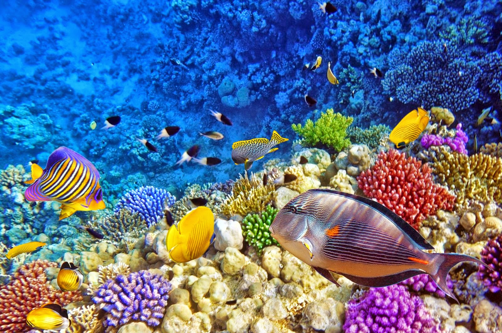 Coral Reef - HD Wallpapers | Earth Blog